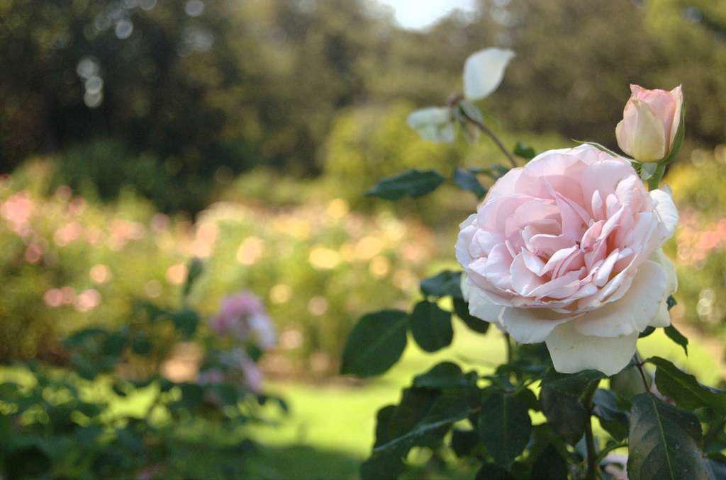 Pink Flower in a Flower Garden