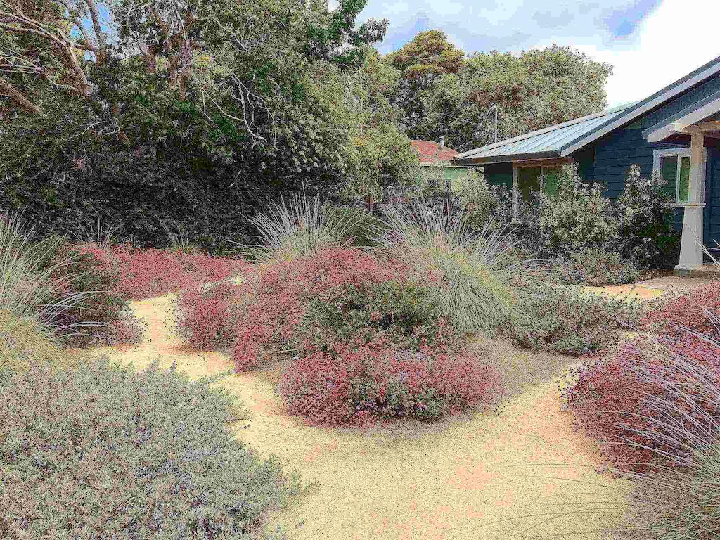 Plantings of rosy buckwheat, deer grass, ceanothus, coyote mint, manzanita and bush anemone