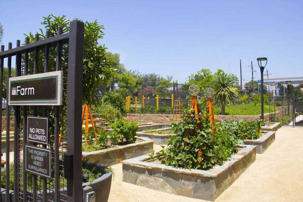 Edible Landscaping at California Apartment Complex