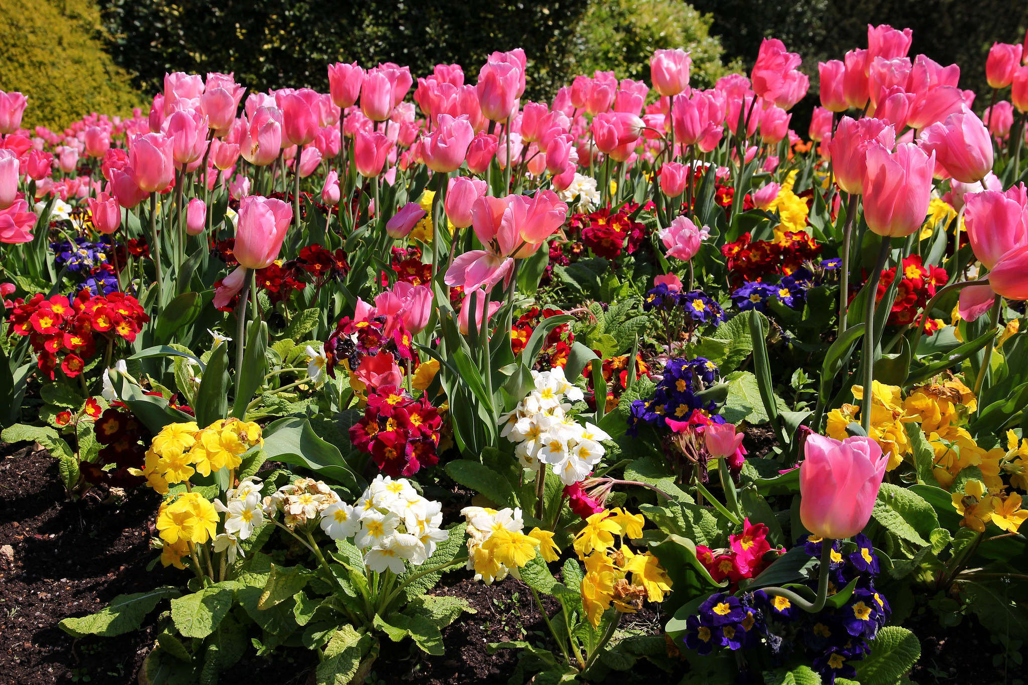Spring plants that can withstand the tough summer heat spring flowers blooming mightylinksfo