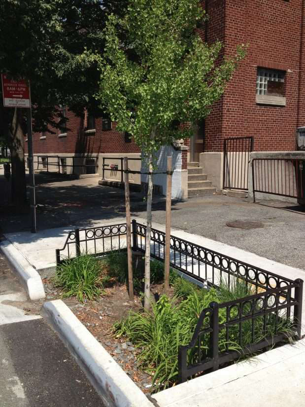 Bioswales causing controversy on New York streets