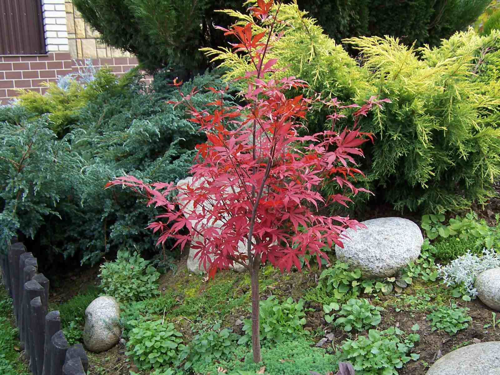 Five small to medium trees that can fit in small spaces for Small trees for japanese garden