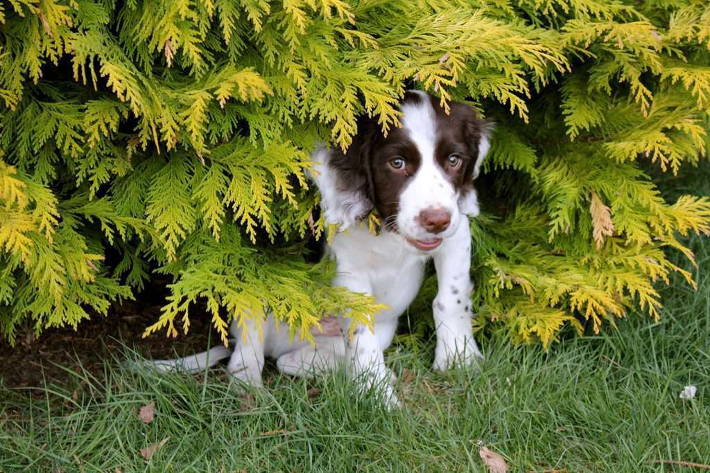 10 poisonous plants to keep away from your clients' pets