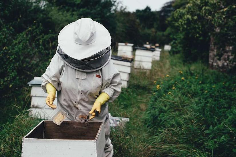 beekeeper tending to bee hives