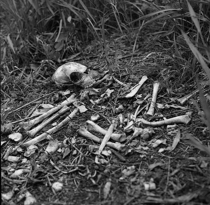 bones-in-grass