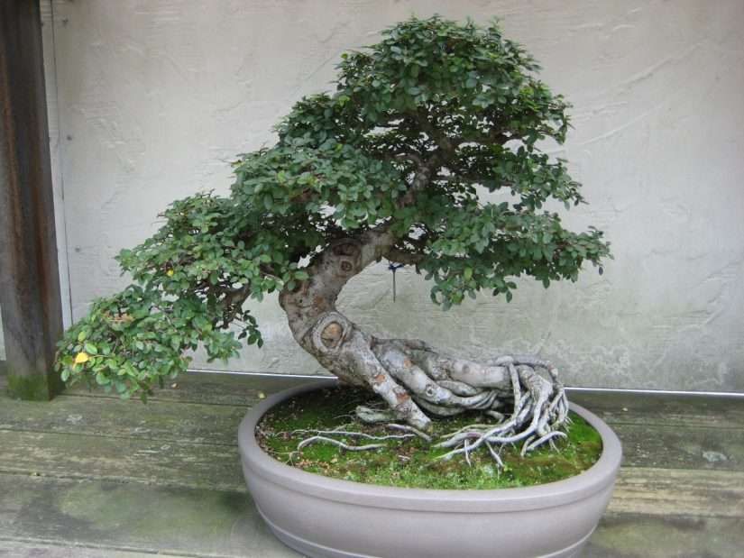 The basics of creating beautiful, bite-sized bonsais
