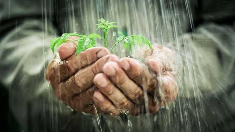 Man Holding Small Plant in the Rain