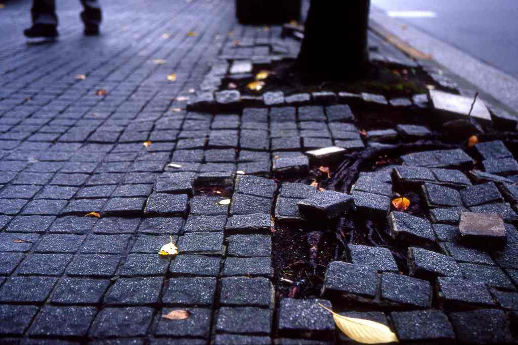 Correcting tree-sidewalk conflicts, how to avoid them