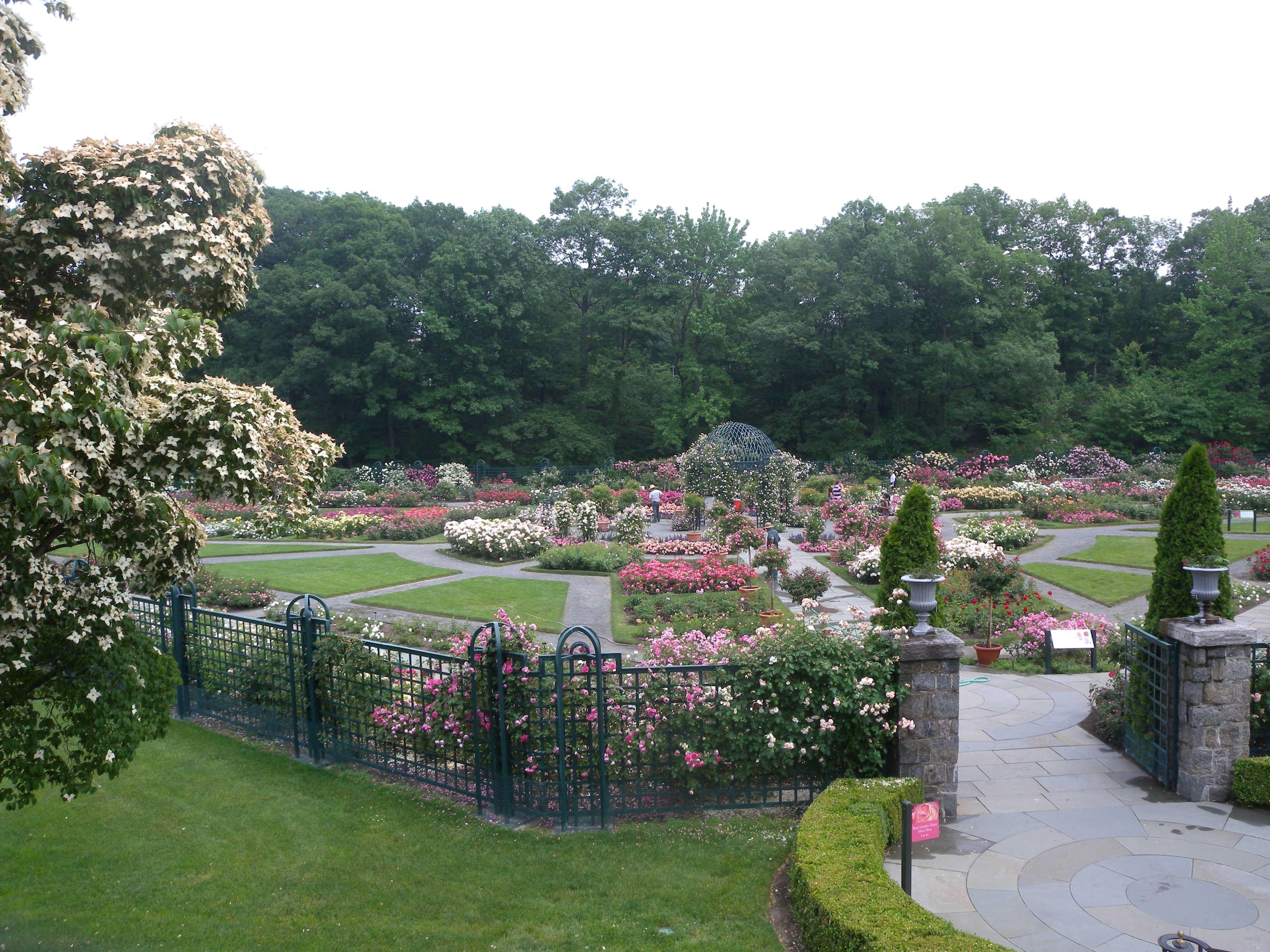 Ordinaire Peggy Rockefeller Rose Garden NYBG