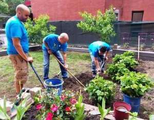 volunteers planting landscape