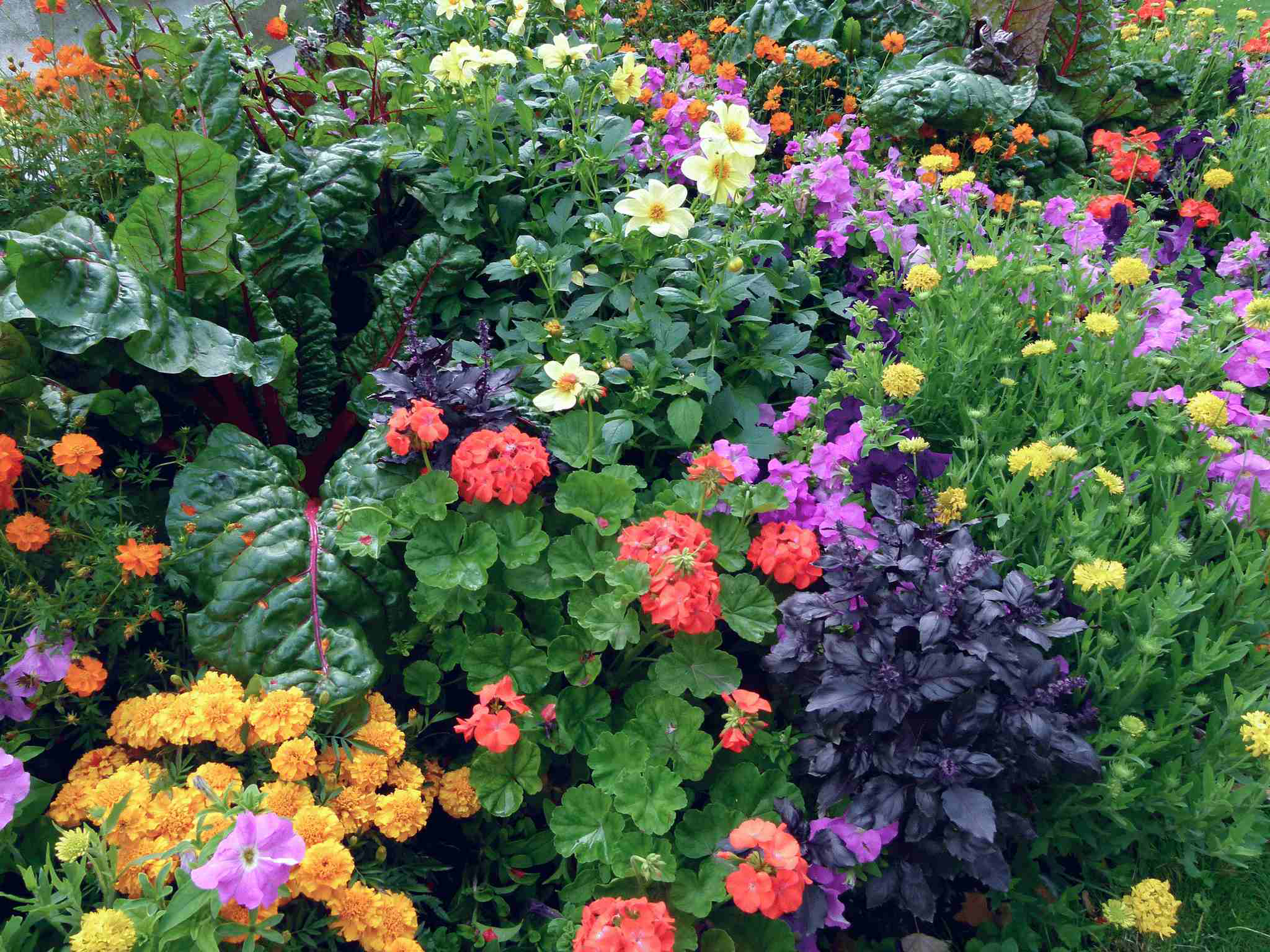 Edibles don 39 t always have to stick to the vegetable patch Flowers to plant in vegetable garden