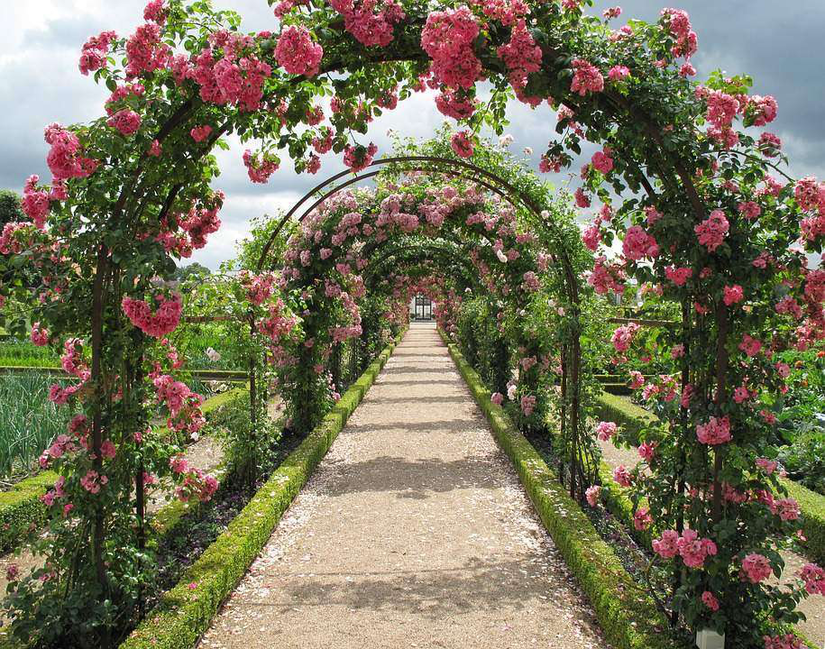rose-arbor