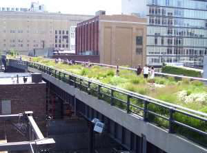 20th street the high line with grasses, shrubs, and perennials