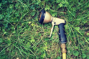 garden hose laying in the grass