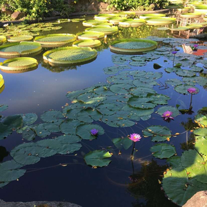 water garden full of colorful lilypads
