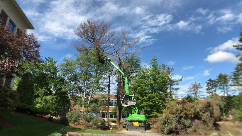 mayer tree service high up in the trees