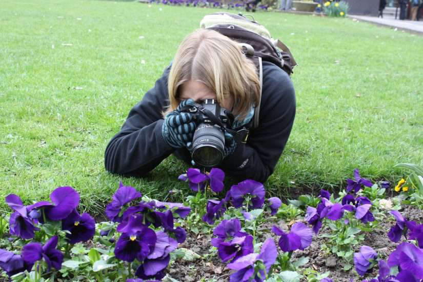 woman photographs purple flowers in garden