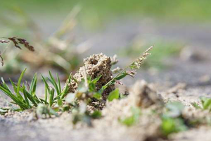 small part of an ant hill