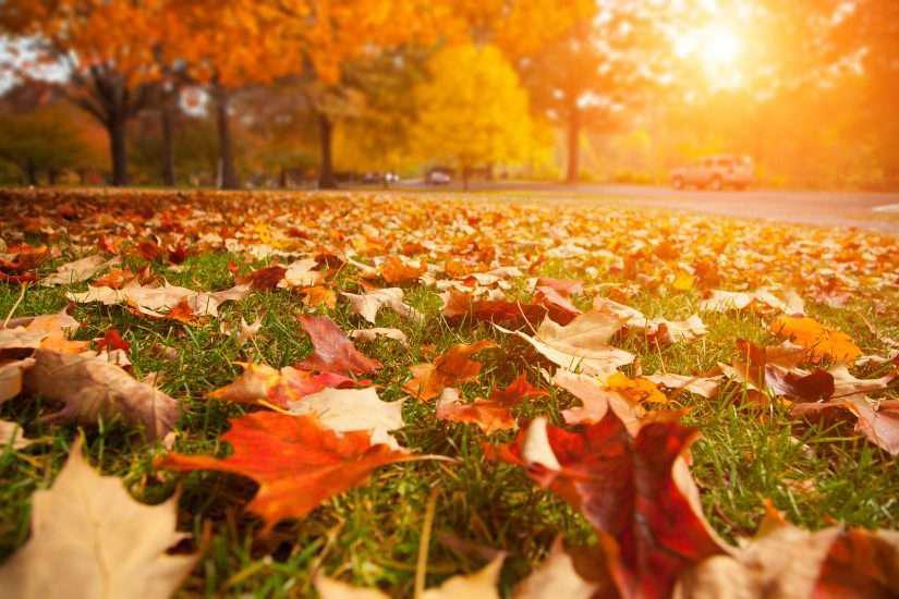 autumn leaves at sunset