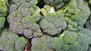 stalks og broccoli