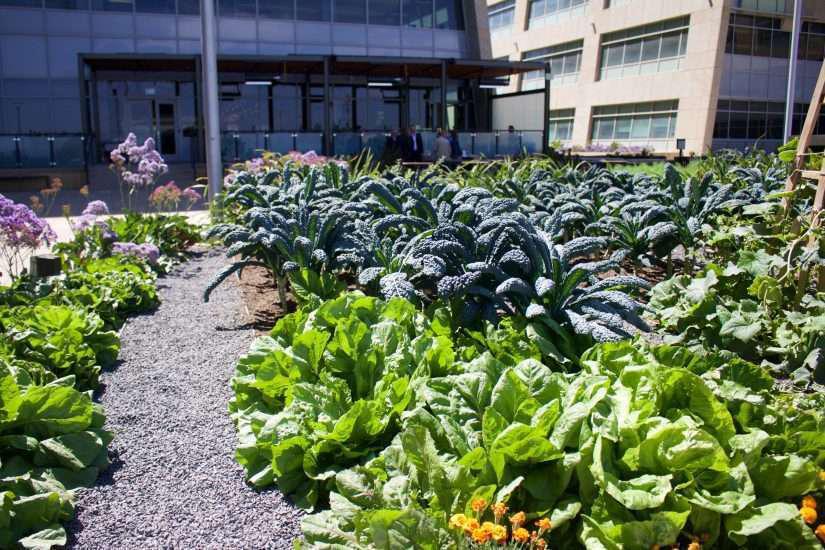 farming garden full of crops