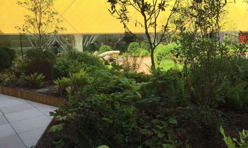 thick foliage in landscaping at museum