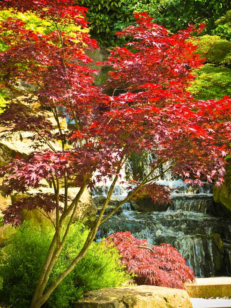 Nj Bamboo Landscaping: Working With Japanese Maples And Bamboo In Landscaping