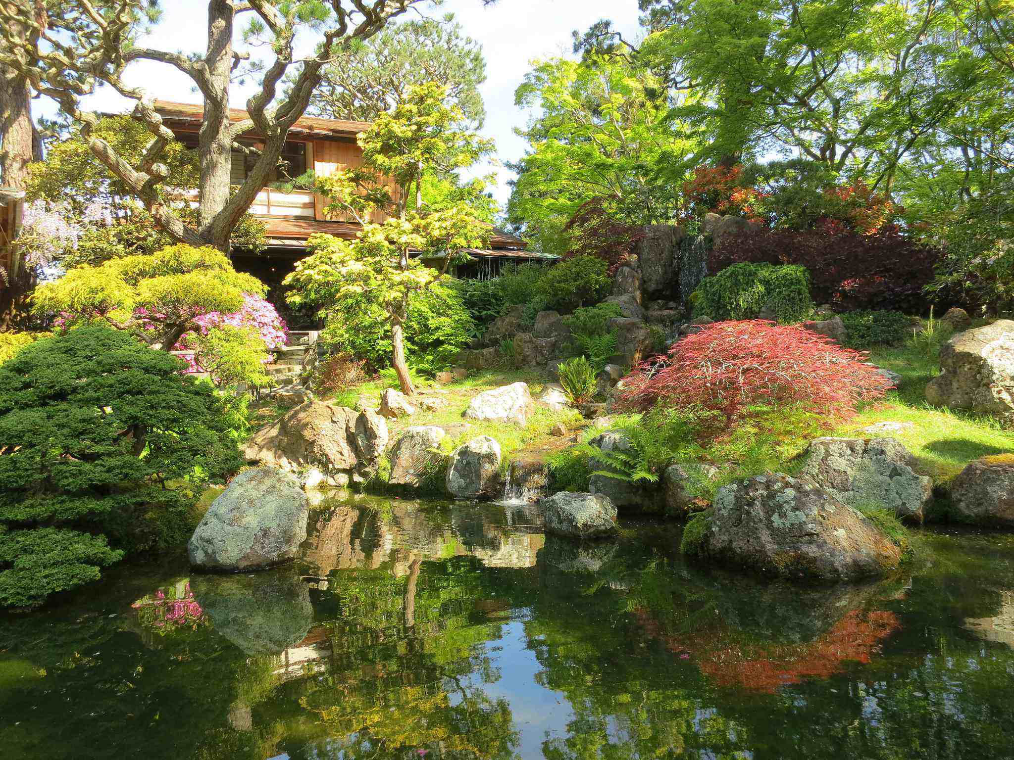Working With Japanese Maples And Bamboo In Landscaping
