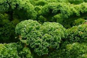 garden on kale