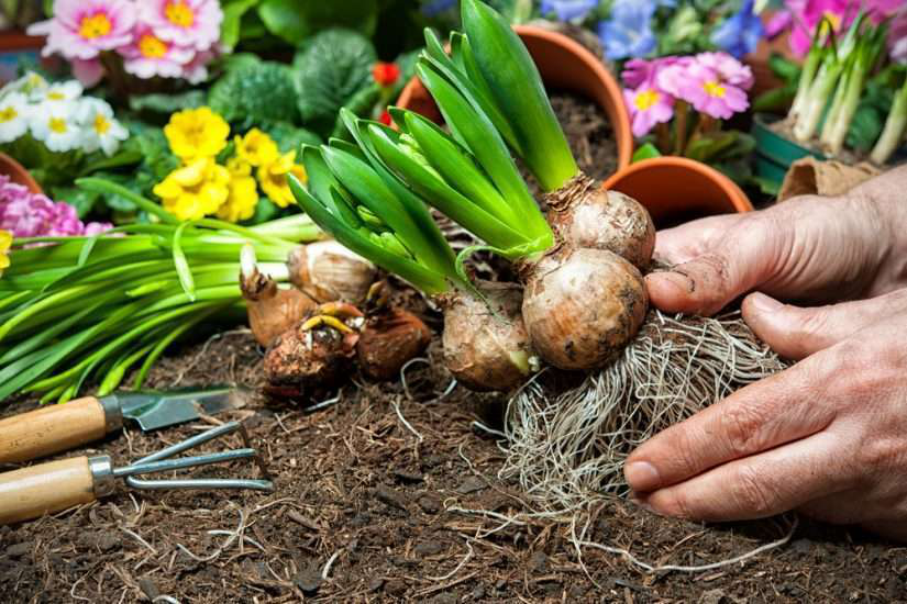 Planting Bulbs In A Colorful Garden