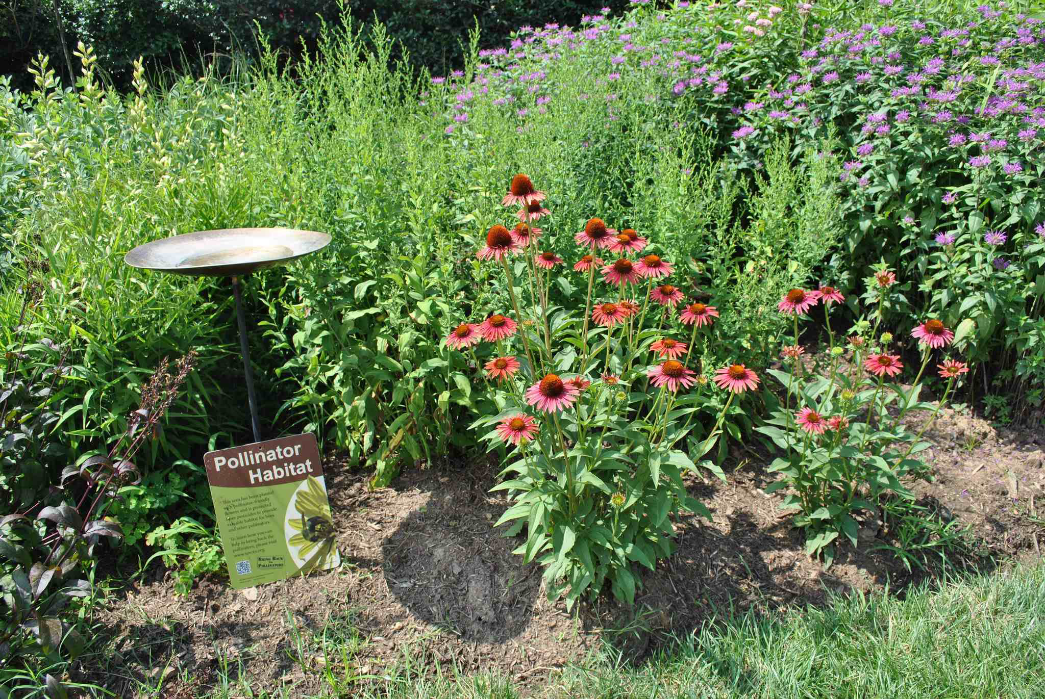 Creating a pollinator habitat for national honeybee day for How to landscape a garden