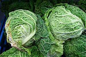 savoy cabbage green