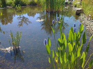 Water features for Small pond care