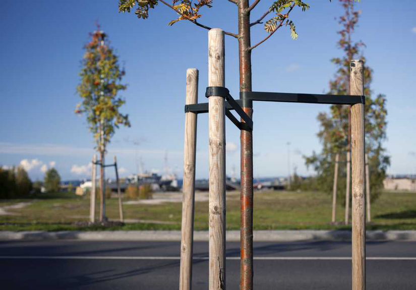 staking trees in landscaping