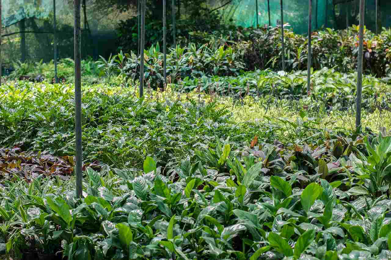 California Nurseries Adjust To New Landscaping Trends Consumer Desires