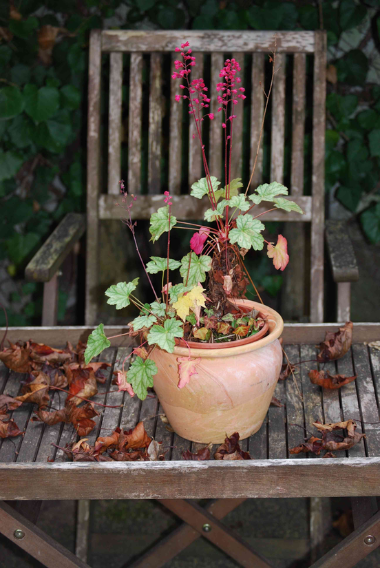 potted fall plant