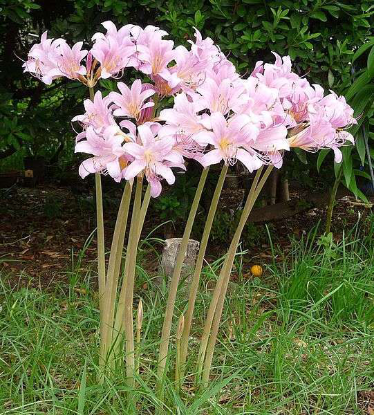 Suggestions For Customers Planting Autumn Bulbs