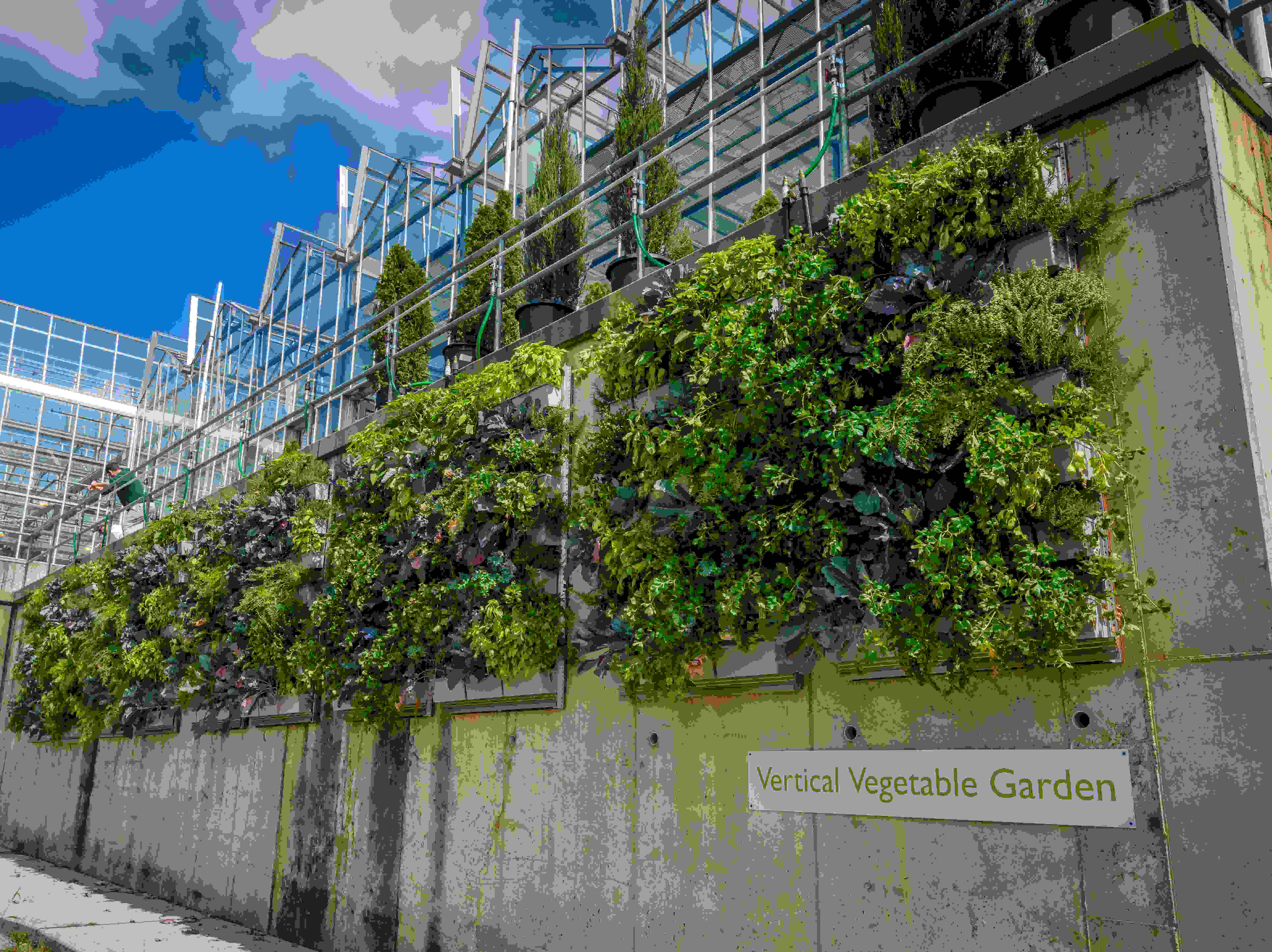 curved modern edibles favorite raised beginners vegetable vertical design bed garden sunset pea ideas designs for magazine hardscaping