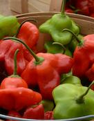pepper mad hatter