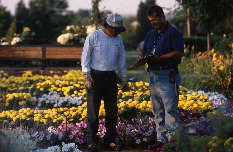 cocal landscape workers in flowers