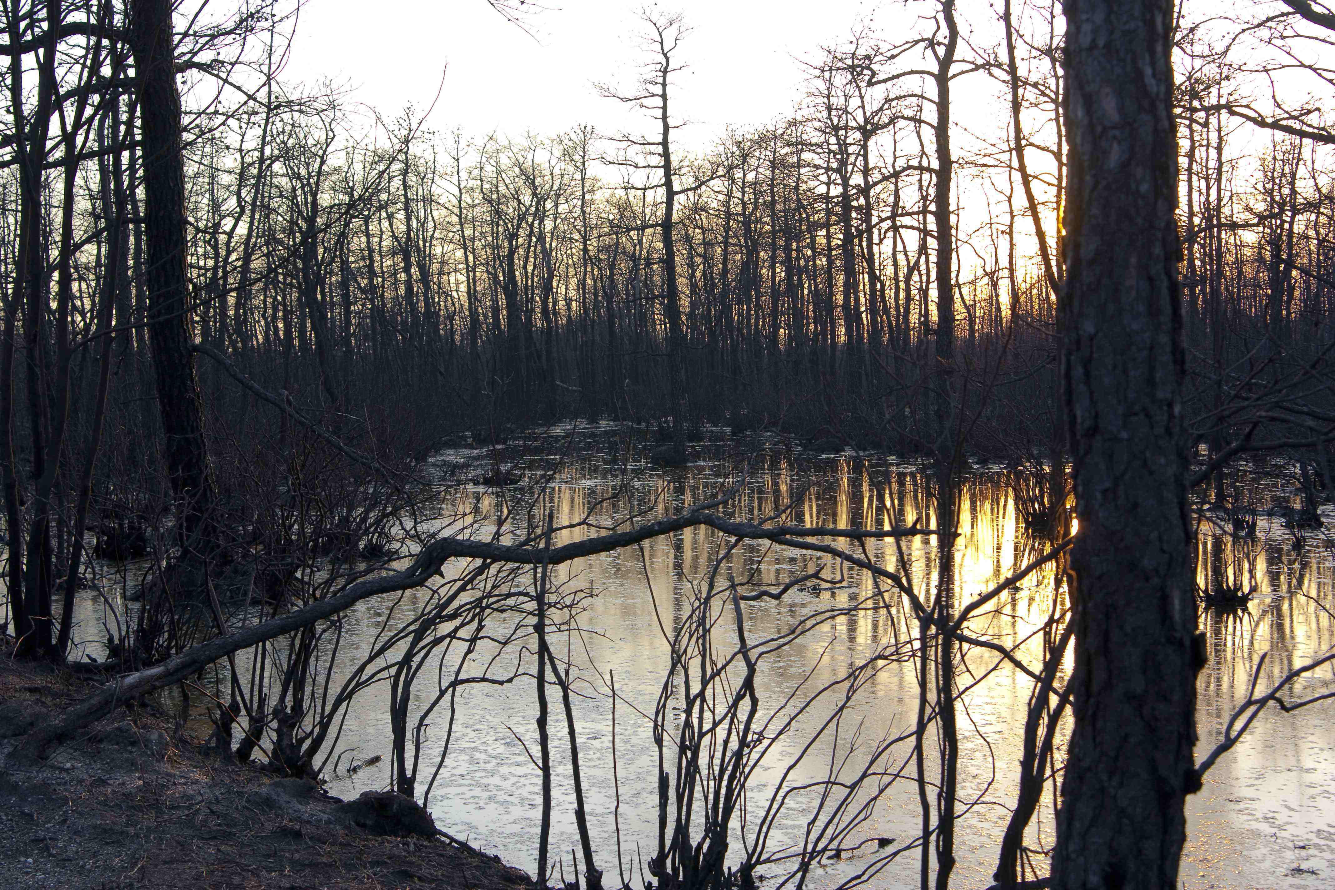 woods surrounding swamp