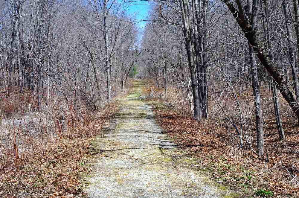 hidden path in woods