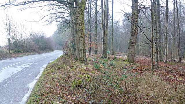 wychwood forest