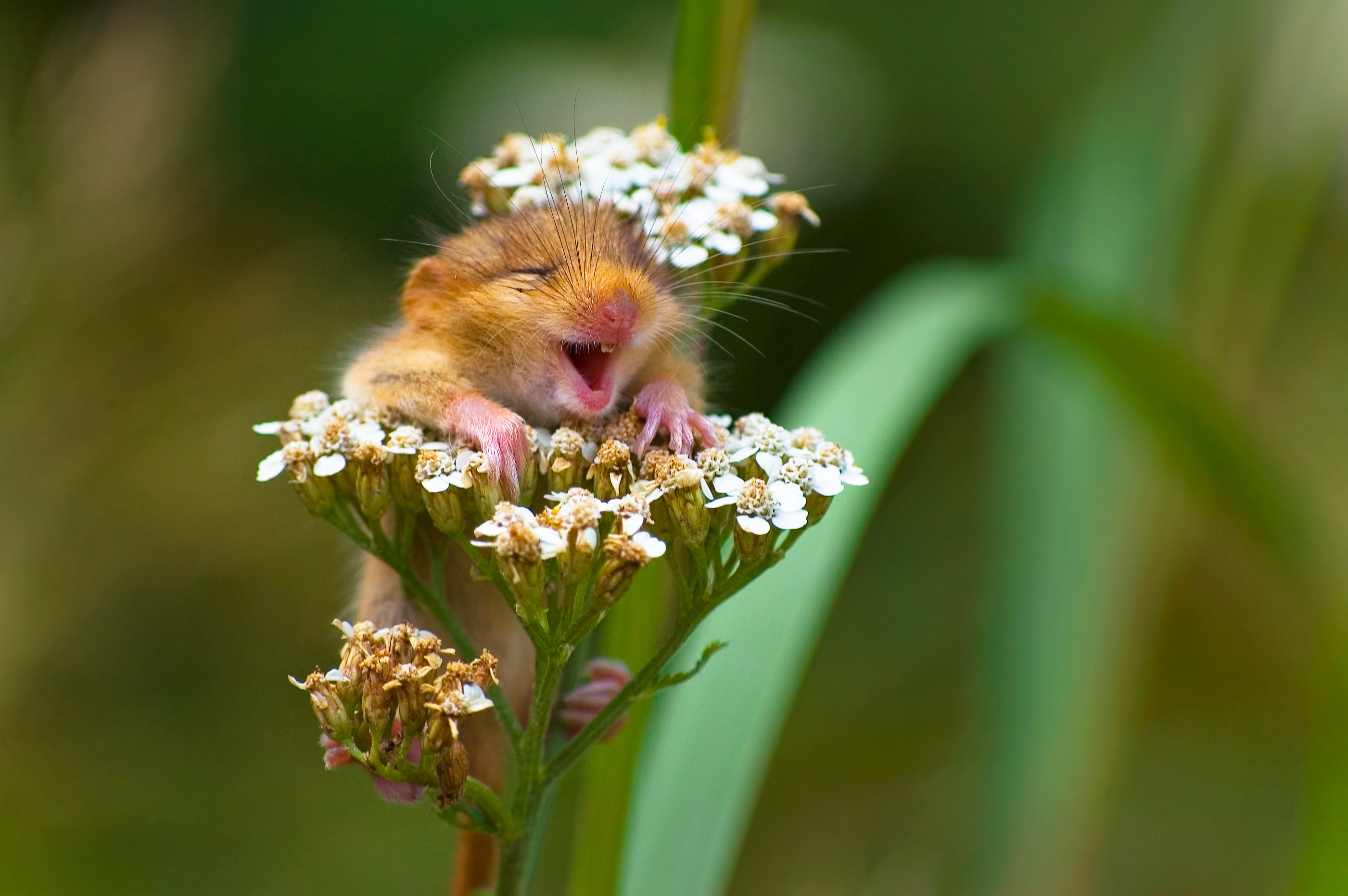happy muse on flower