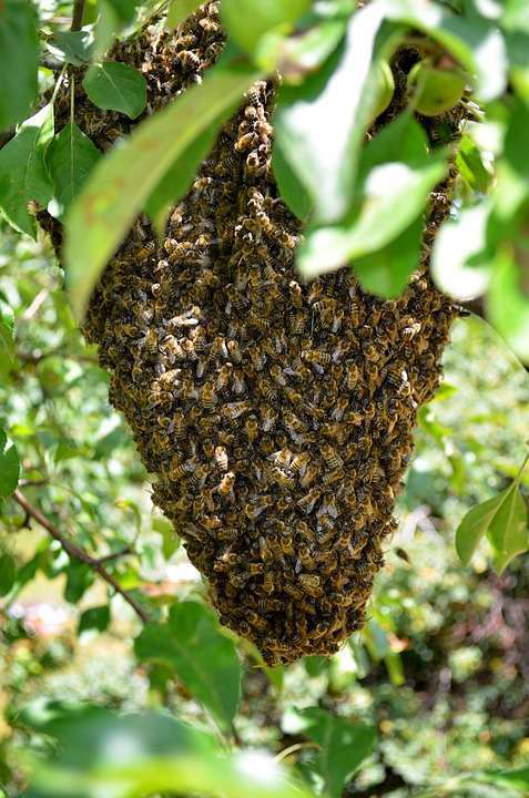 swarm hive of bees