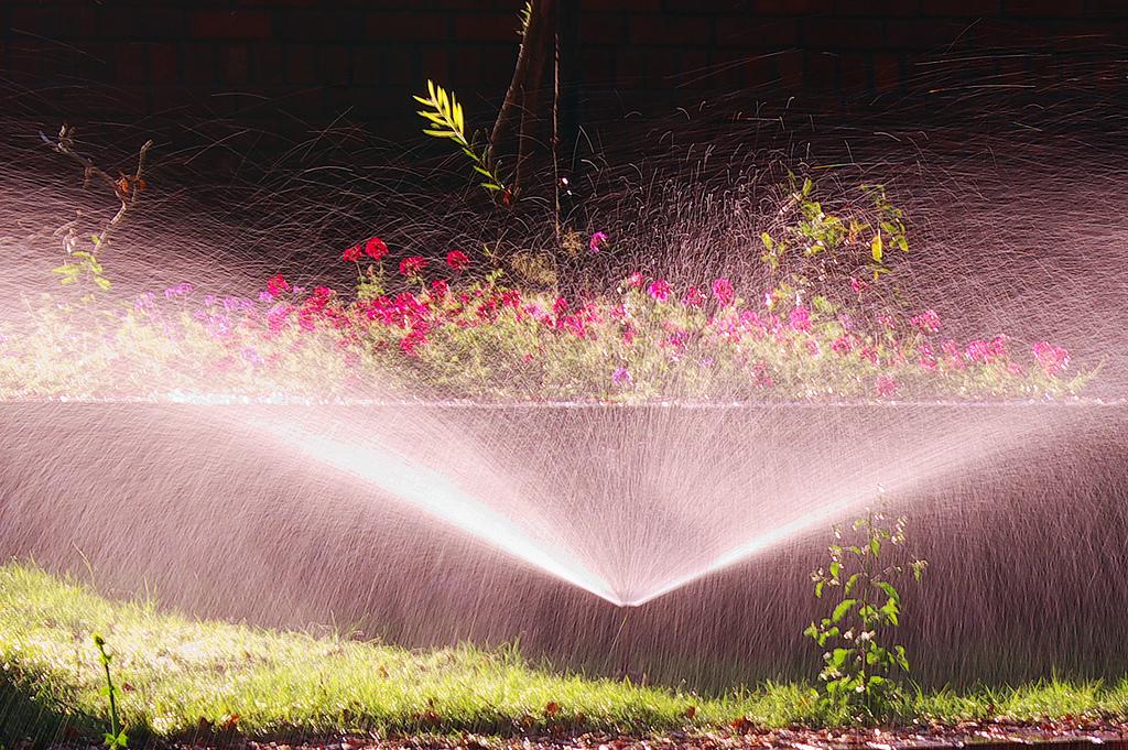 sprinkler system watering plants