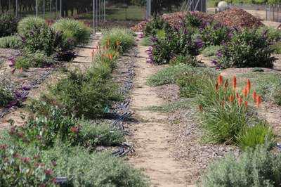 plant trials