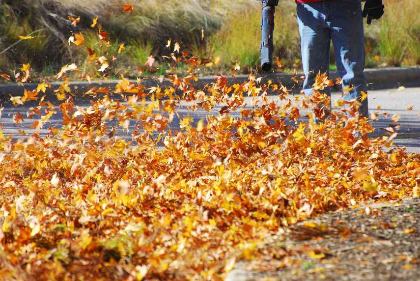 leaves blowing from leaf blower