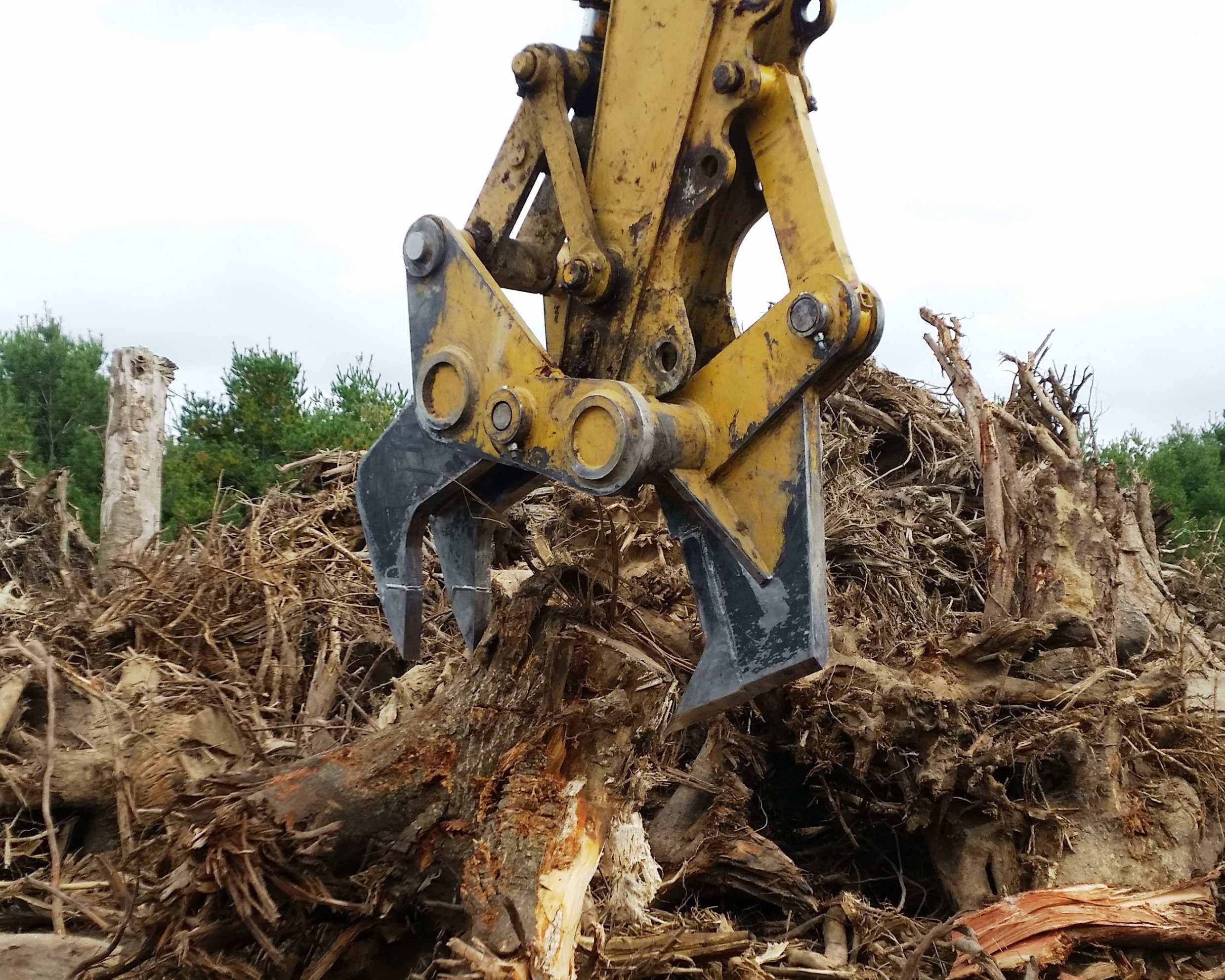 clearing out tree stumps and debris with Ransome stump harvester
