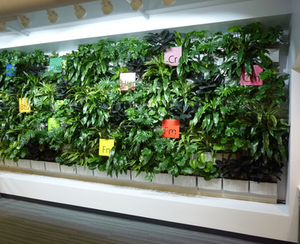 installed living wall from LiveWall